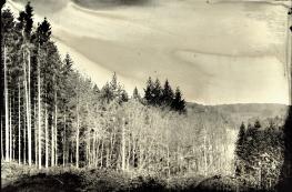 landscape004s