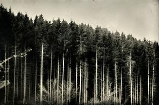 landscape005s