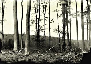 landscape006s